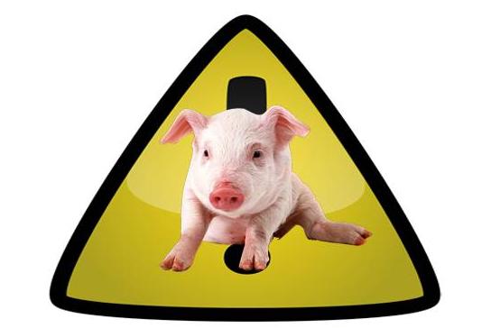 网上养猪赚钱的软件是真的吗?不如试试手机赚钱更靠谱。